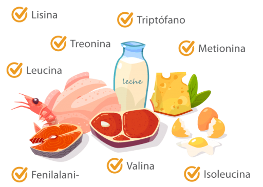 alimentacionbalanceada-aminoacidos-b